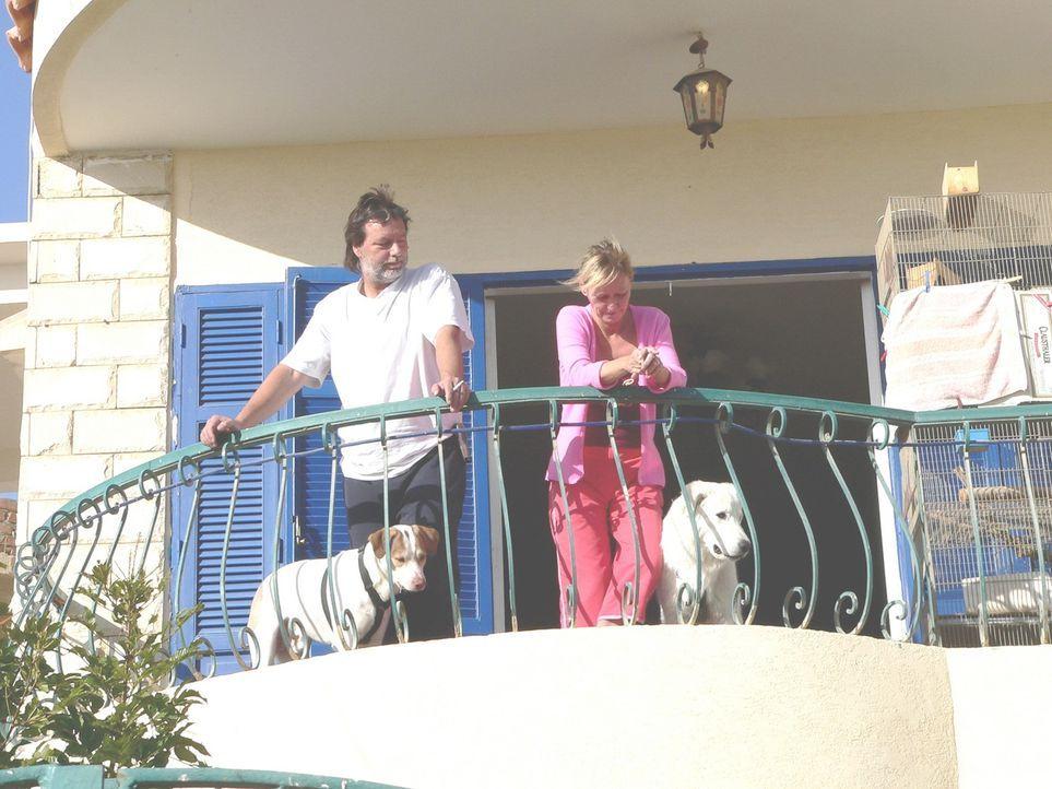 Familie Peters lebt seit sieben Jahren in Ägypten. Die Familie steht momentan unter enormen Zeitdruck, sie muss in ihr neu erworbenes 650 qm großes... - Bildquelle: kabel eins