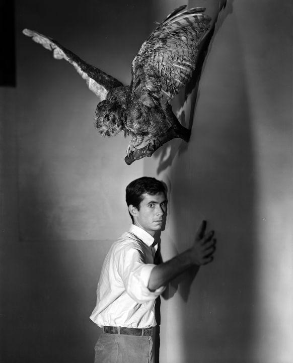 Mit 400.000 Dollar auf der Flucht checkt Marion in einem mysteriösen Motel ein. Hier trifft sie auf Norman Bates (Anthony Perkins) - und der Traum v... - Bildquelle: 1960 Shamley Productions, Inc. Renewed 1988 by Universal City Studios, Inc. All Rights Reserved.