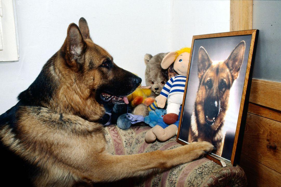 Rex ist stolz: Moser hat ein Porträt von ihm gerahmt! - Bildquelle: Ali Schafler Sat.1