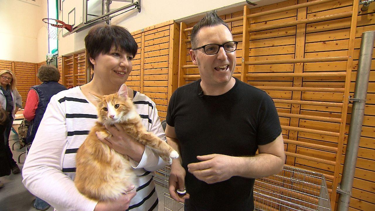 Vor etwa einem Monat hat sie zwei Norwegische Waldkatzen-Kitten bei einer Züchterin gekauft. Jetzt wollen Tanja (l.) und Jens (r.) eine Katzenzucht... - Bildquelle: SAT.1