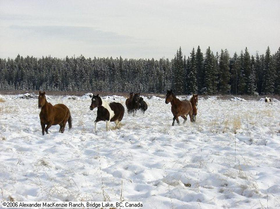 Minusgrade in der Wildnis und die Tiere fressen Thorsten und Karin buchstäblich die Haare vom Kopf - nach einem Jahr in Kanada gestaltet sich das Le... - Bildquelle: kabel eins