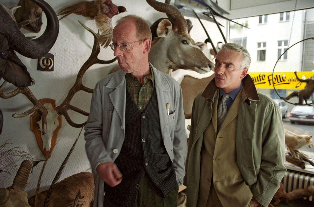 Felix (Christoph M. Ohrt, r.) besucht das Atelier des Tiermodellbauers Schubert (Hans Peter Korff, l.). - Bildquelle: Hardy Spitz Sat.1