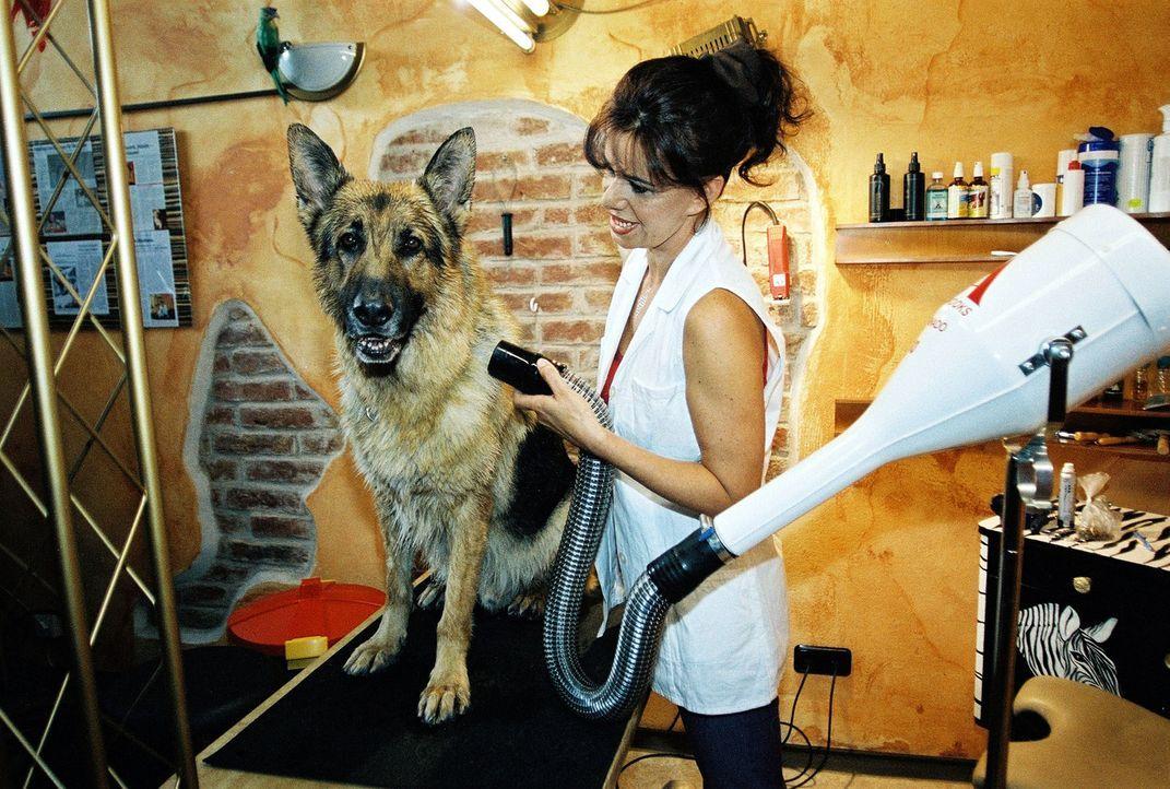 Die Hundefriseurin (Suyin Orlowski) gibt Rex den letzten Schliff. - Bildquelle: Ali Schafler Sat.1