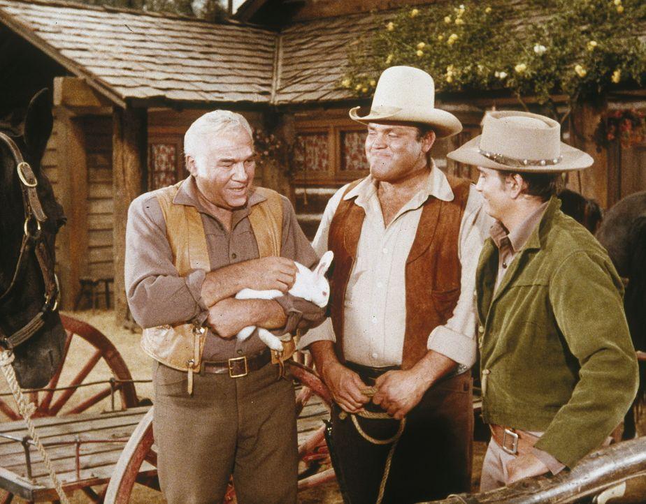 Weil Hoss (Dan Blocker, M.) und Little Joe (Michael Landon, r.) knapp bei Kasse sind, lassen sie sich auf ein Geschäft ein, was sie ganz schnell rei... - Bildquelle: Paramount Pictures
