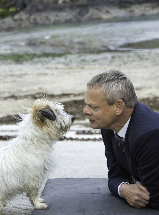 (7. Staffel) - Wider Willen auf den Hund gekommen: Doc Martin (Martin Clunes) ... - Bildquelle: Neil Genower IN LETZTER MINUTE