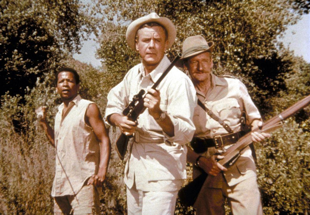 Tierarzt Dr. Marsh Tracy (Marshall Thompson, M.) im Kampf gegen Wilderer. - Bildquelle: CBS Television