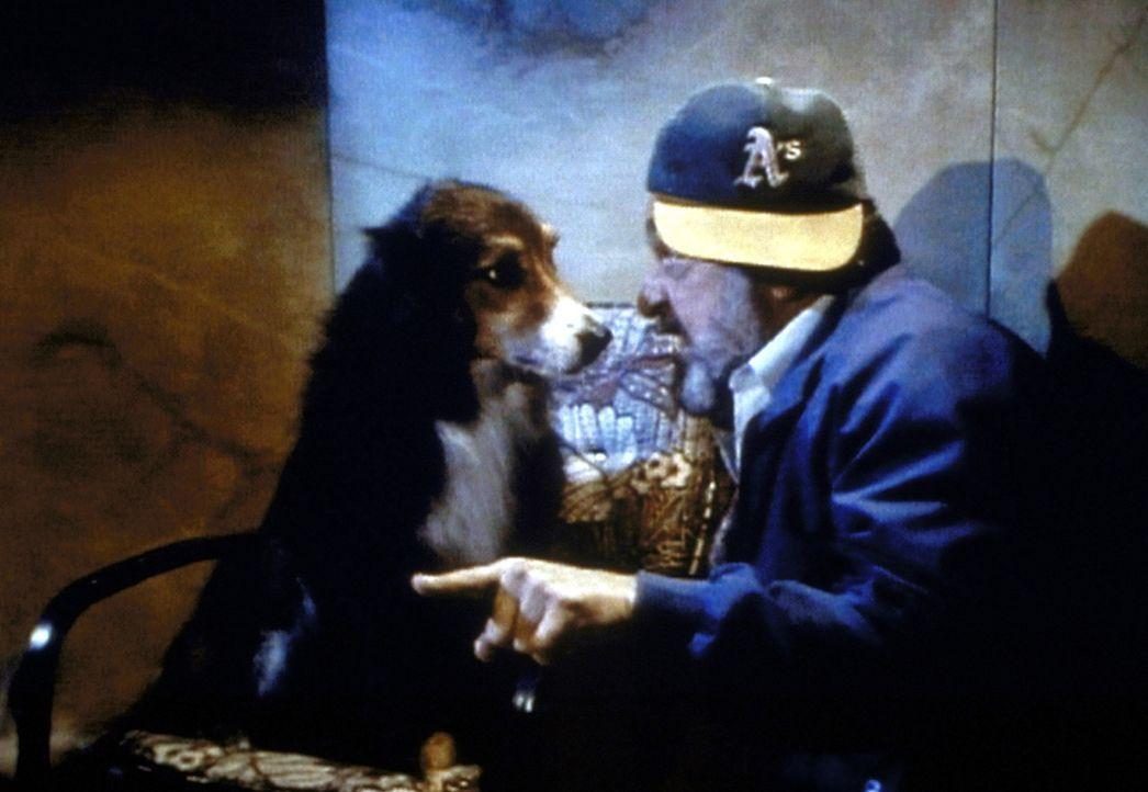 Mark (Victor French) kann nicht glauben, dass sich Jonathan in einen Hund verwandelt hat. - Bildquelle: Worldvision Enterprises, Inc.