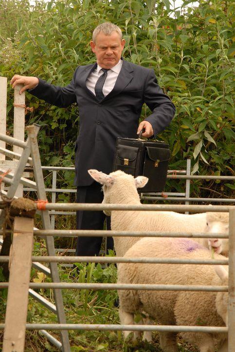 Kann den Schafen seiner Tante nichts abgewinnen: Martin (Martin Clunes) muss eine junge Patientin behandeln, die sich oft und gerne auffällig schlec... - Bildquelle: BUFFALO PICTURES/ITV