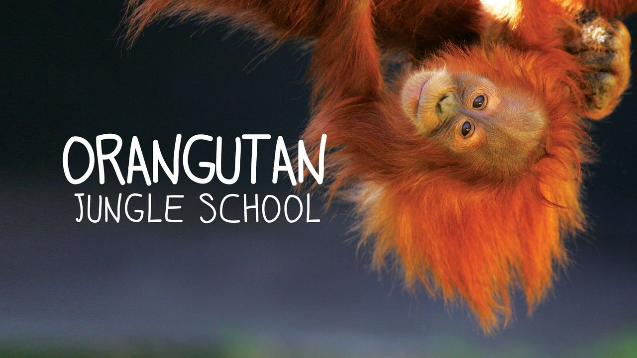 Orangutan Jungle School - Kindergarten mal anders - Artwork - Bildquelle: Blue Ant Media Solutions Inc, MMXVIII