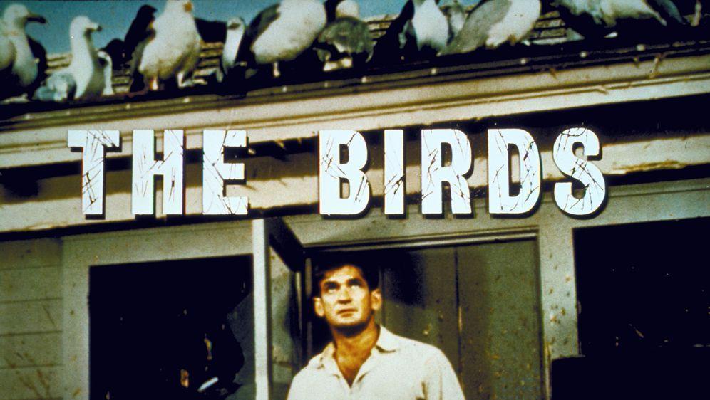 Die Vögel - Bildquelle: 2000 Universal Studios
