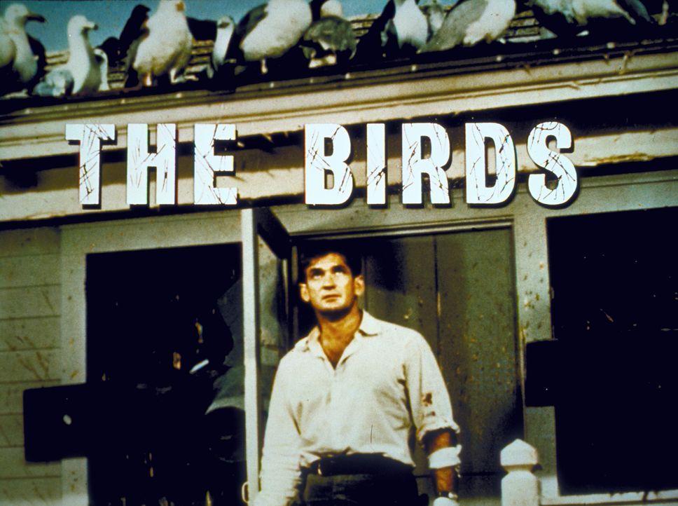 Die Vögel ... - Bildquelle: 2000 Universal Studios