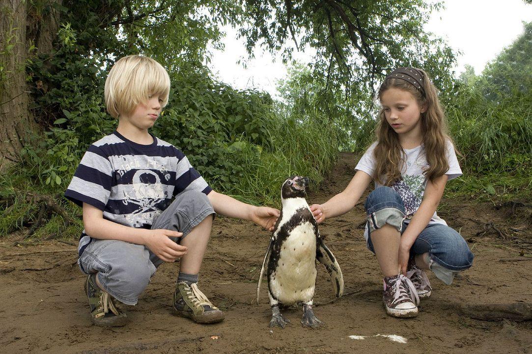 """Hanna (Julia Scherlitz, r.) und Tom (Tom Hoßbach, l.) haben ihren Liebling """"Schulze"""" entführt, um ihn vor dem Einschläfern zu retten. Der Pinguin so... - Bildquelle: Thomas Kost Sat.1"""