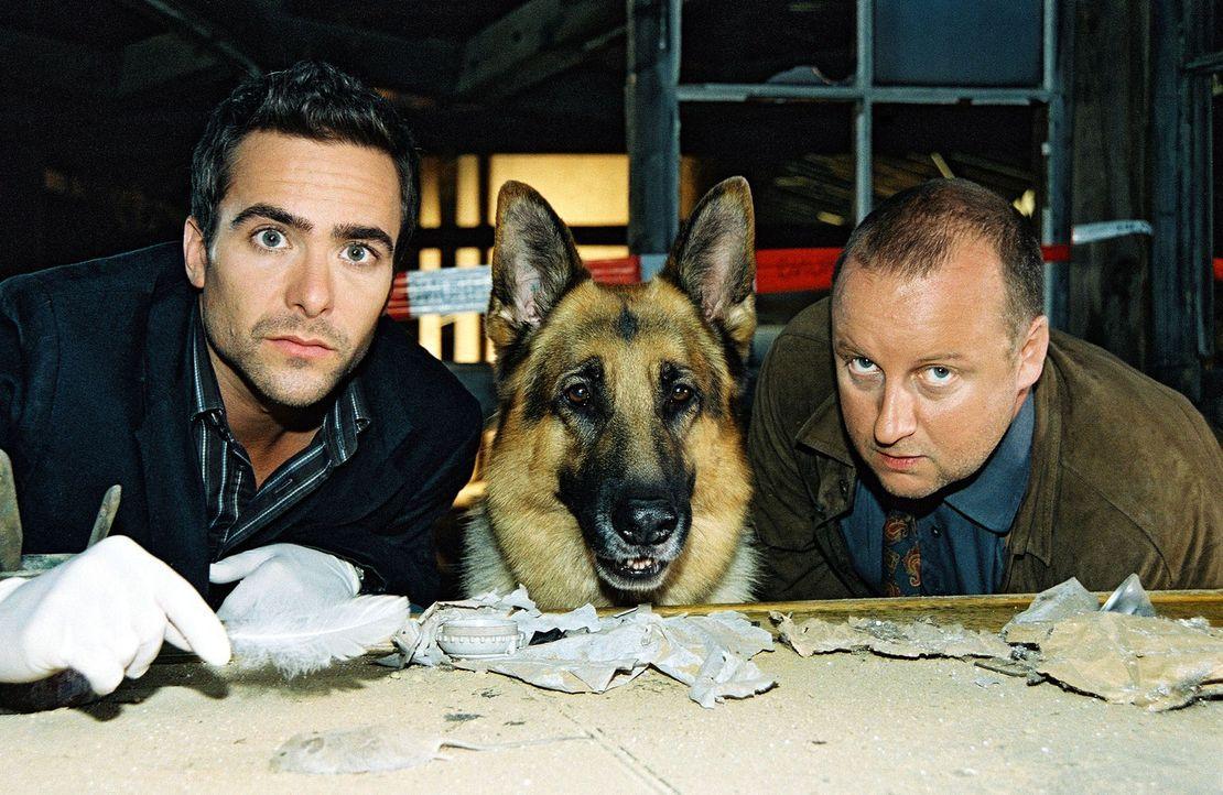 Marc (Alexander Pschill, l.), Rex und Kunz (Martin Weinek, r.) werden zu einer leer stehenden Fabrik gerufen. Dort wurde eine halbverkohlte Leiche g... - Bildquelle: Ali Schafler Sat.1