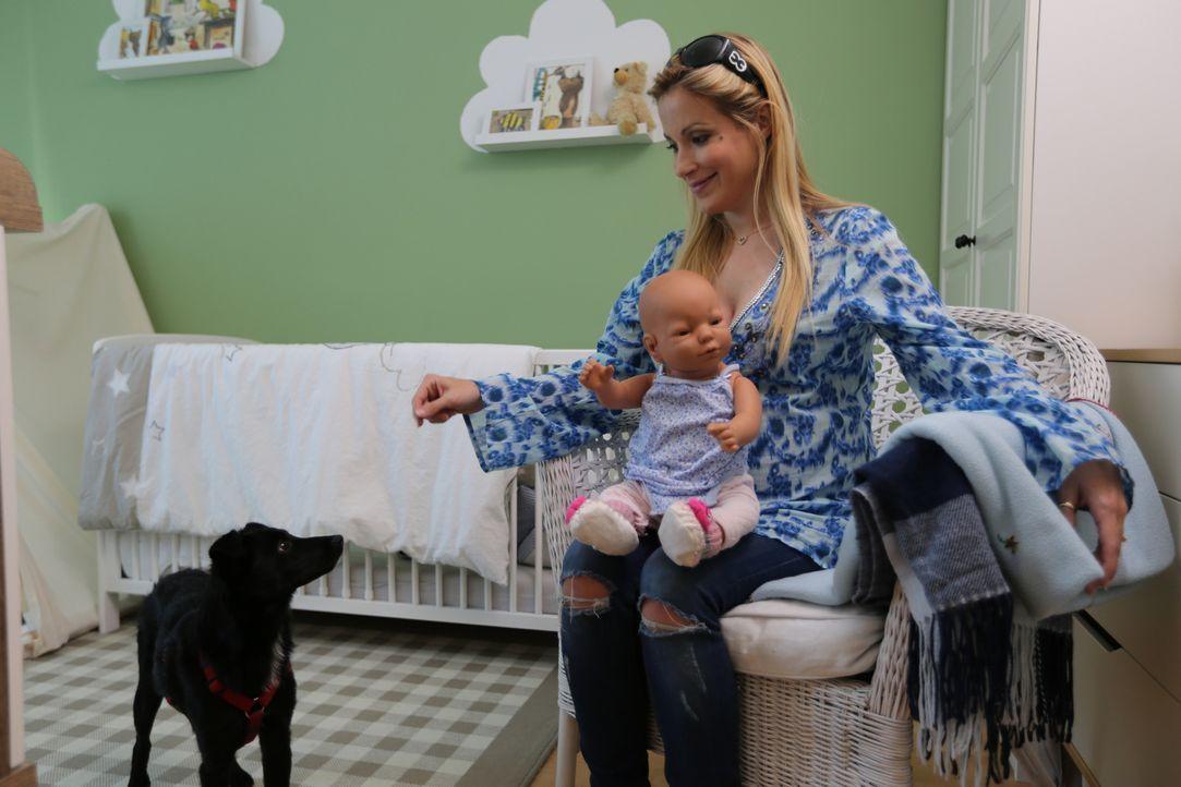 Moderatorin Andrea Kaiser lernt bei Hundecoach Enrico Lombardi, wie man seinen Hund an ein Baby gewöhnt. Aus gutem Grunde ... - Bildquelle: SAT.1