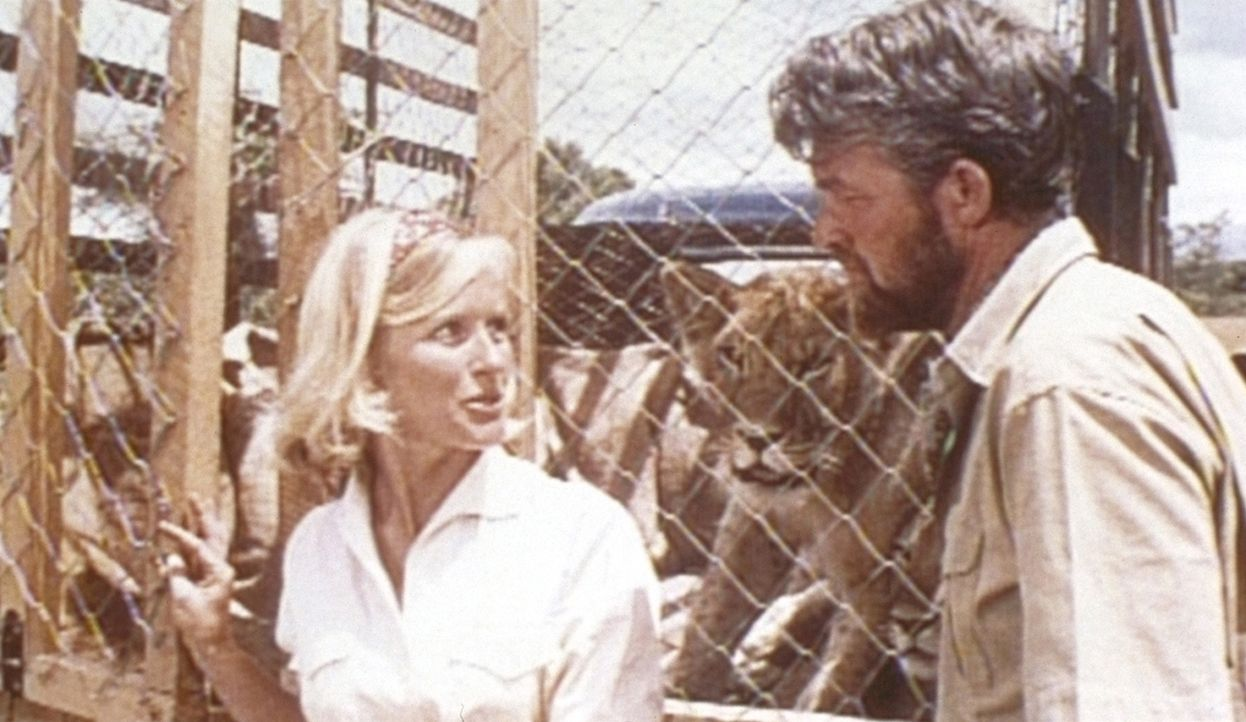 George Adamson (Bill Travers, r.) und seine Frau Joy (Virginia McKenna, l.) haben verwaiste Löwenbabies großgezogen. Schweren Herzens geben sie die... - Bildquelle: 1965, renewed 1993 Columbia Pictures Industries, Inc. All Rights Reserved.