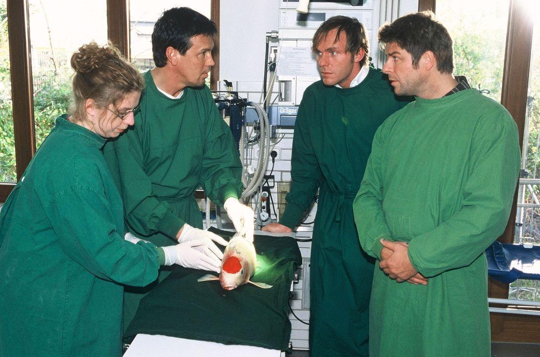 Jupp (Uwe Fellensiek, r.) und Falk (Dirk Martens, 2.v.r.)  beobachten Dr. Schibusawa (Liu Wejan, l.) und Dr. Kortner (Klaus Zmorek, 2.v.l.) bei der... - Bildquelle: Münstermann Sat.1