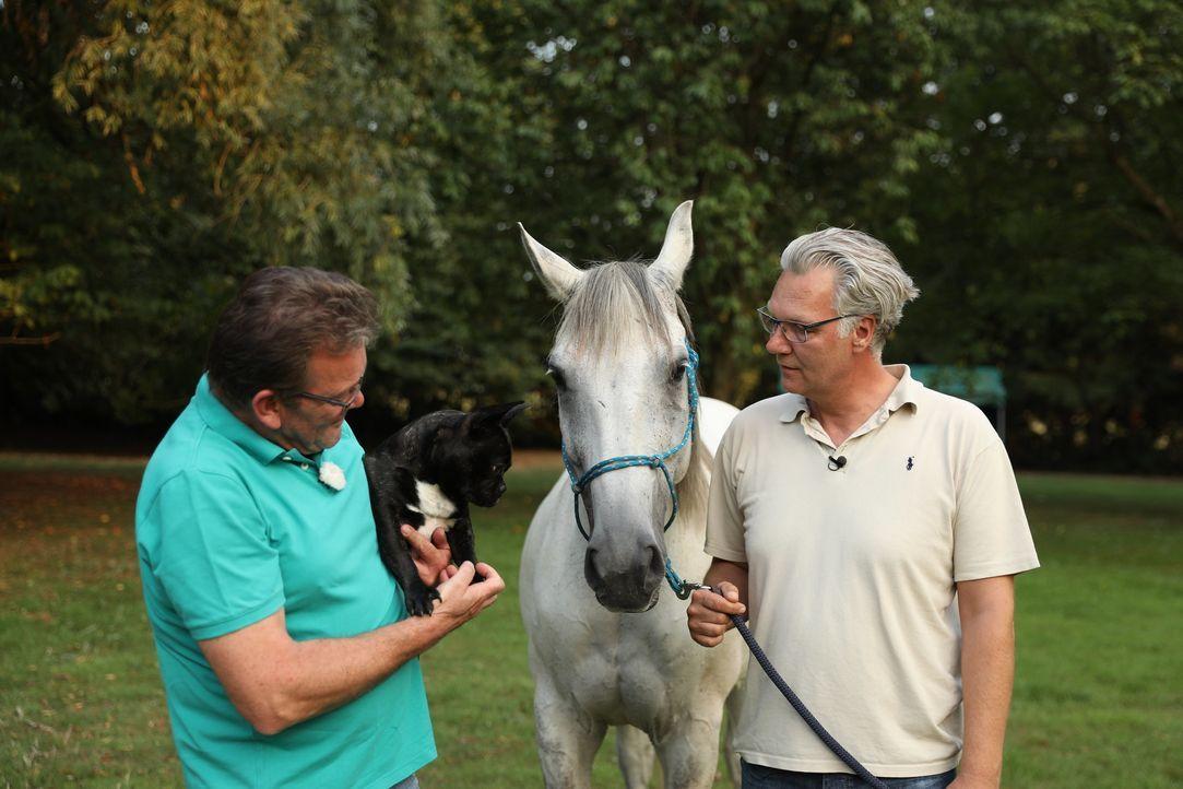 Dr. Herbert Dreesen (l.); Klaus (r.) - Bildquelle: SAT.1 GOLD