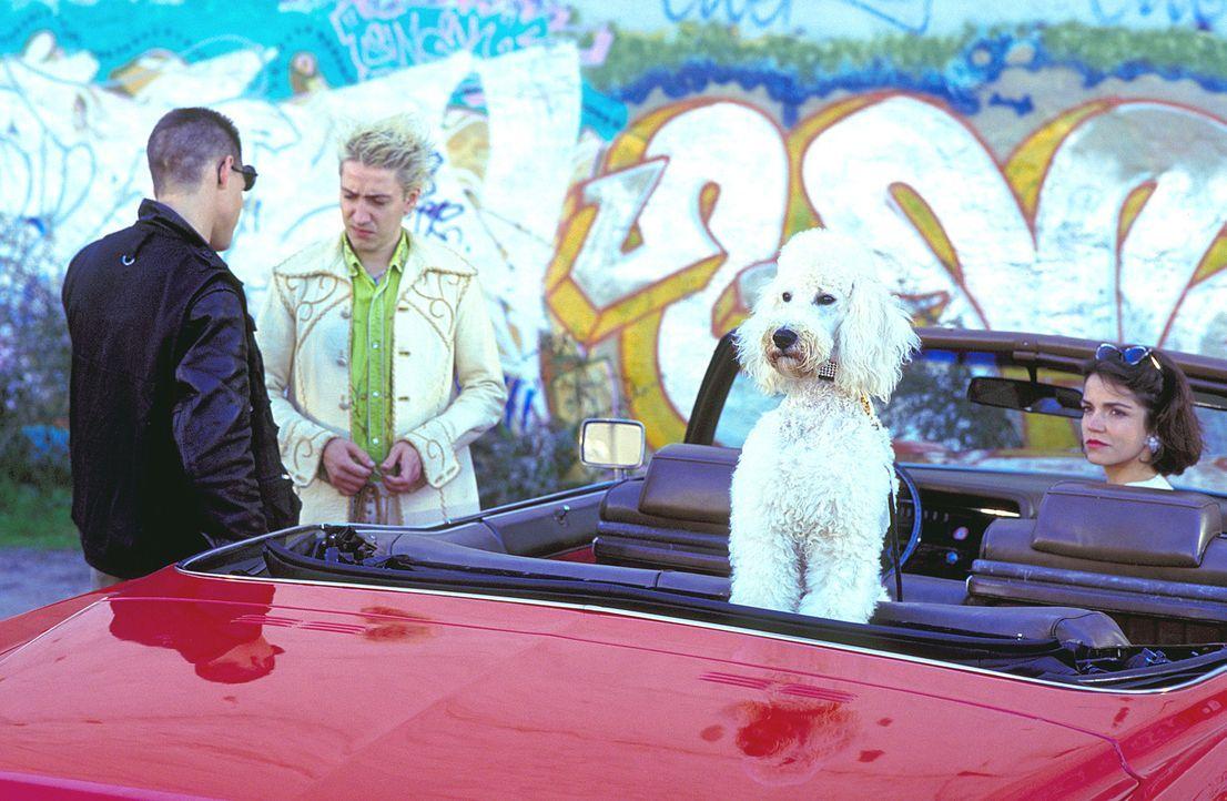 """Eigentlich sollte Automechaniker Chris (Mario Irrek, M.) lediglich den knallroten 71er Cadillac """"Eldorado"""" für eine Kundin nach San Remo überführen.... - Bildquelle: ProSieben"""