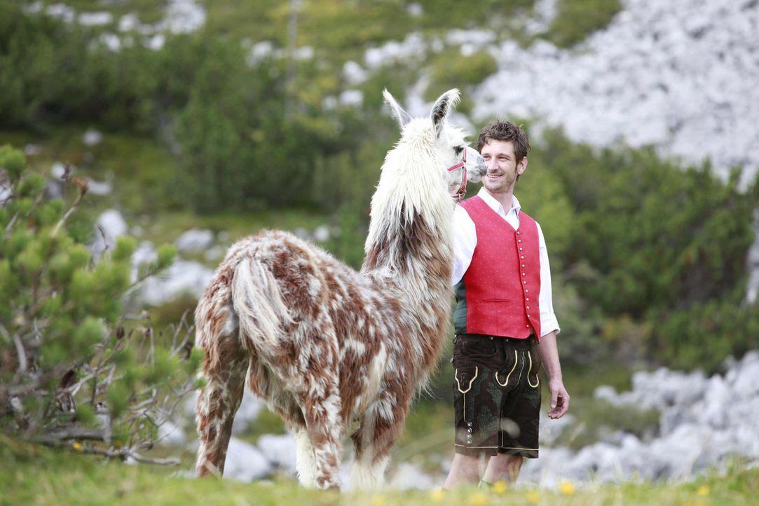 Lama auf Abwegen: Auf der Jagd nach dem Lama erkennt Franzi, dass man seinen Erinnerungen nicht davonlaufen kann, insbesondere wenn sie von einem ke... - Bildquelle: Andrea Mayer-Rinner SAT. 1