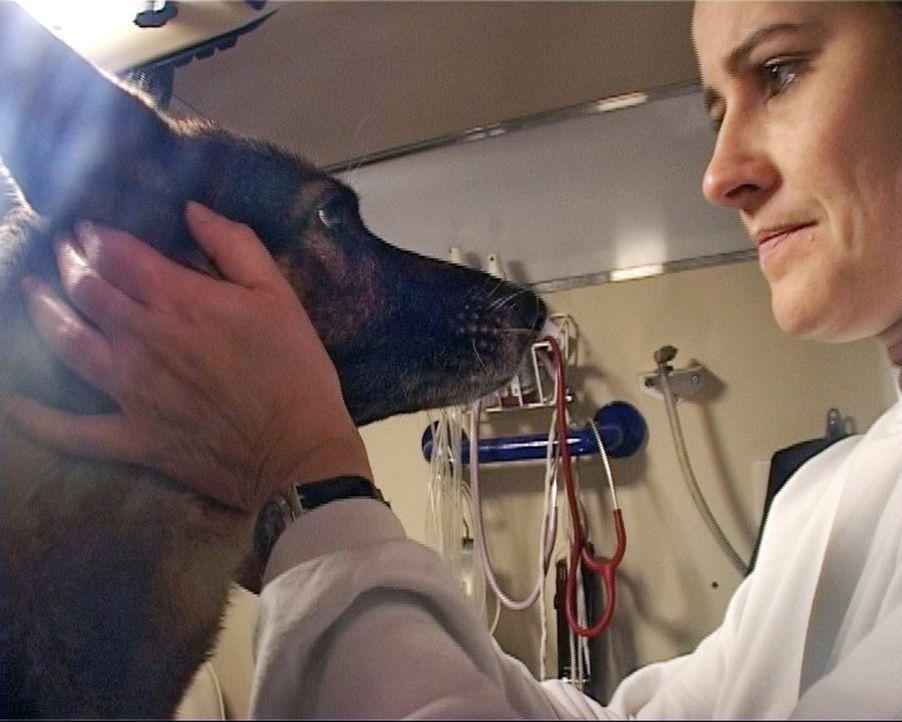 Täglich ist auch Jeanette auf der Straße. Die Tierärztin kümmert sich kostenlos um Hunde, Ratten und Katzen der Straßenkids. Doch die Berlineri... - Bildquelle: Sat.1