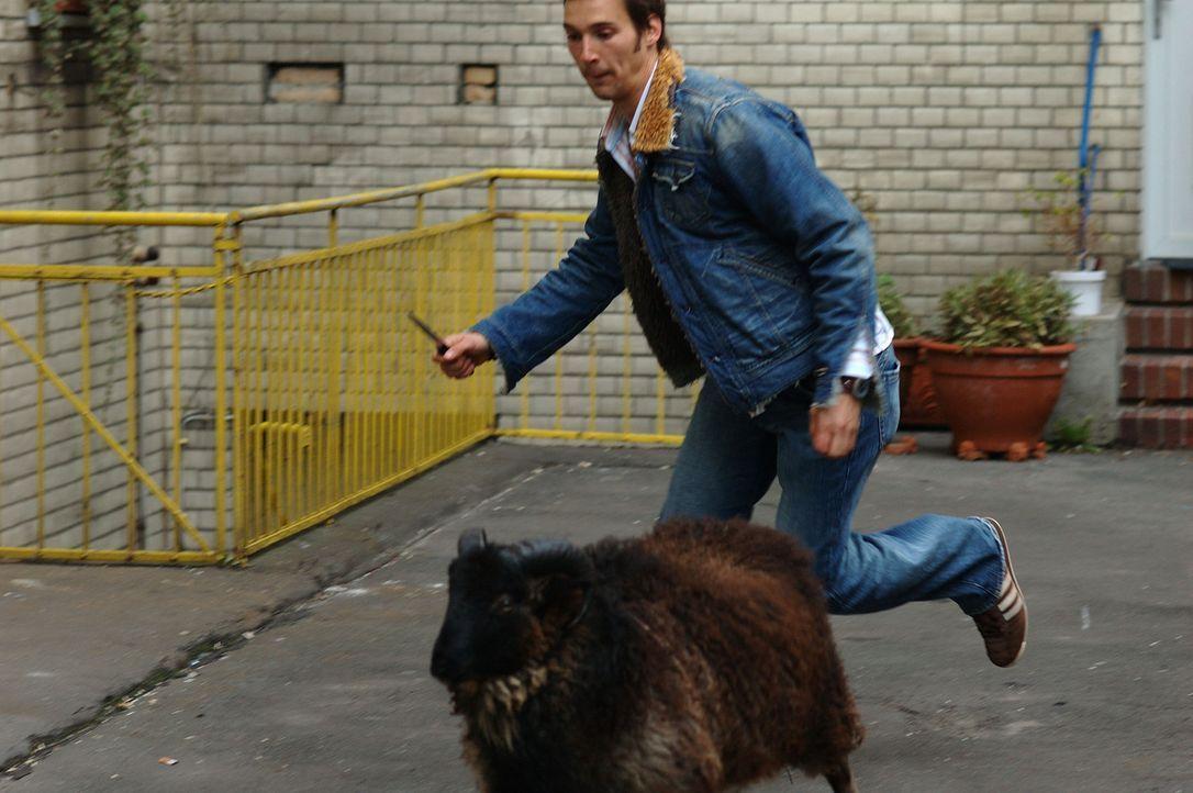 Um die Familie seiner türkischen Freundin zu gewinnen, muss Götz (Florian David Fitz) sogar anlässlich einer Beschneidungsfeier ein Schaf schächten.... - Bildquelle: Dirk Plamböck ProSieben
