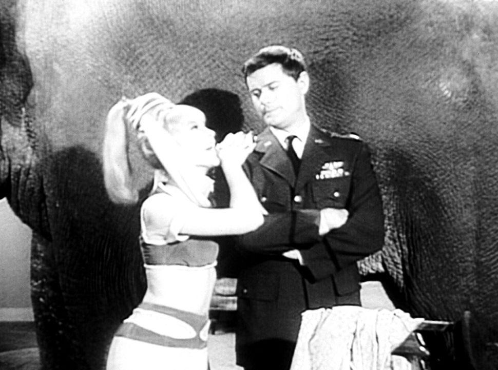 Jeannie (Barbara Eden, l.) möchte ihrem Tony (Larry Hagman, r.) etwas Besonderes schenken; er soll an etwas Großes denken. Schon steht ein Elefant i... - Bildquelle: Columbia Pictures