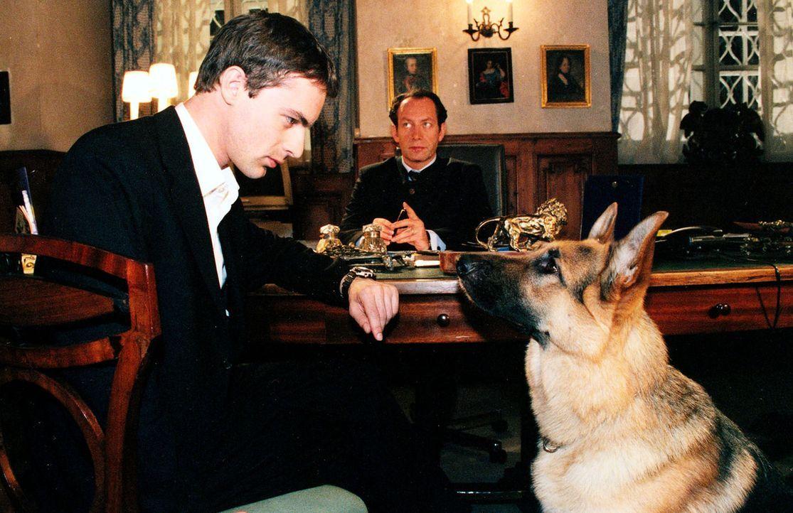 Kommissar Brandtner (Gedeon Burkhard, l.) und Rex befragen den Hotelbesitzer Martin Haller (Robert Hunger-Bühler, r.) zu seiner Tochter Sandra, die... - Bildquelle: Ali Schafler Sat.1