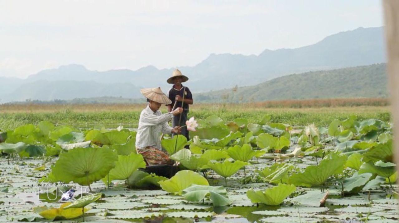 Die Lotusblume liefert einen der exklusivsten Stoffe der Welt: die Lotusseide. - Bildquelle: Sat.1 Gold