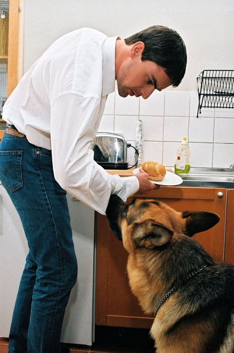 Kommissar Brandtner (Gedeon Burkhard, l.) präsentiert Rex  seine morgendliche Wurstsemmel. - Bildquelle: Ali Schafler Sat.1