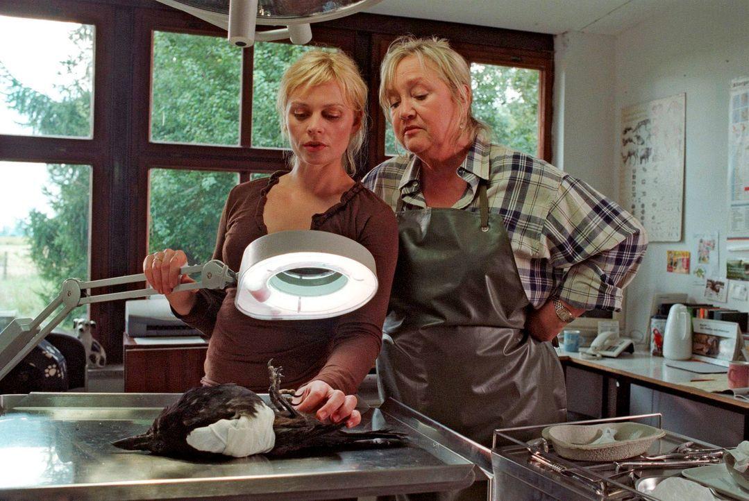 Alex (Susanna Simon, l.) und ihre Mutter Edith (Doris Kunstmann, r.) untersuchen eine Krähe. - Bildquelle: Susan Skelton Sat.1
