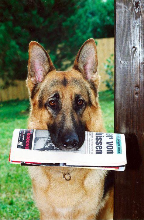 Rex bringt die Morgenzeitung mit einer ungewöhnlichen Meldung: Ein Jugendlicher ist von einem Hund totgebissen worden. Das macht Kommissar Brandtner... - Bildquelle: Ali Schafler Sat.1