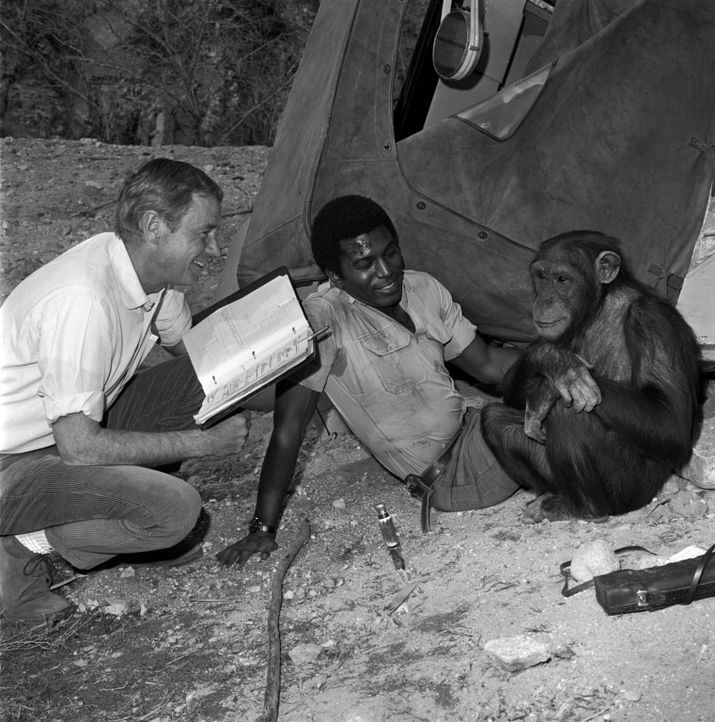 Immer wieder müssen Dr. Marsh Tracy (Marshall Thompson, l.) und Mike (Hari Rhodes, r.) feststellen, dass Schimpansin Judy ihren ganz eigenen Sinn fü... - Bildquelle: 2007 Warner Brothers