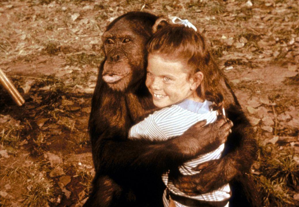 Judy, das Schimpansenweibchen sorgt nicht selten für aufregende Situationen, zeigt aber auch häufig nahezu menschliche Gefühle und Reaktionen ... - Bildquelle: CBS Television