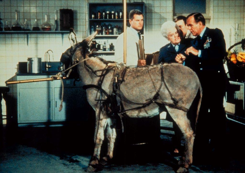 Dr. Bellows (Hayden Rorke, r.) und Colonel Finch (Reta Shaw) überprüfen Tony (Larry Hagman, l.) und Roger (Bill Daily, 2.v.r.), wie sie besonderes G... - Bildquelle: Columbia Pictures