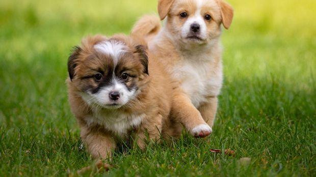 S1Gold_XXL Artikel_Einfach tierisch Alles rund ums Leben mit Haustier_Haustie...