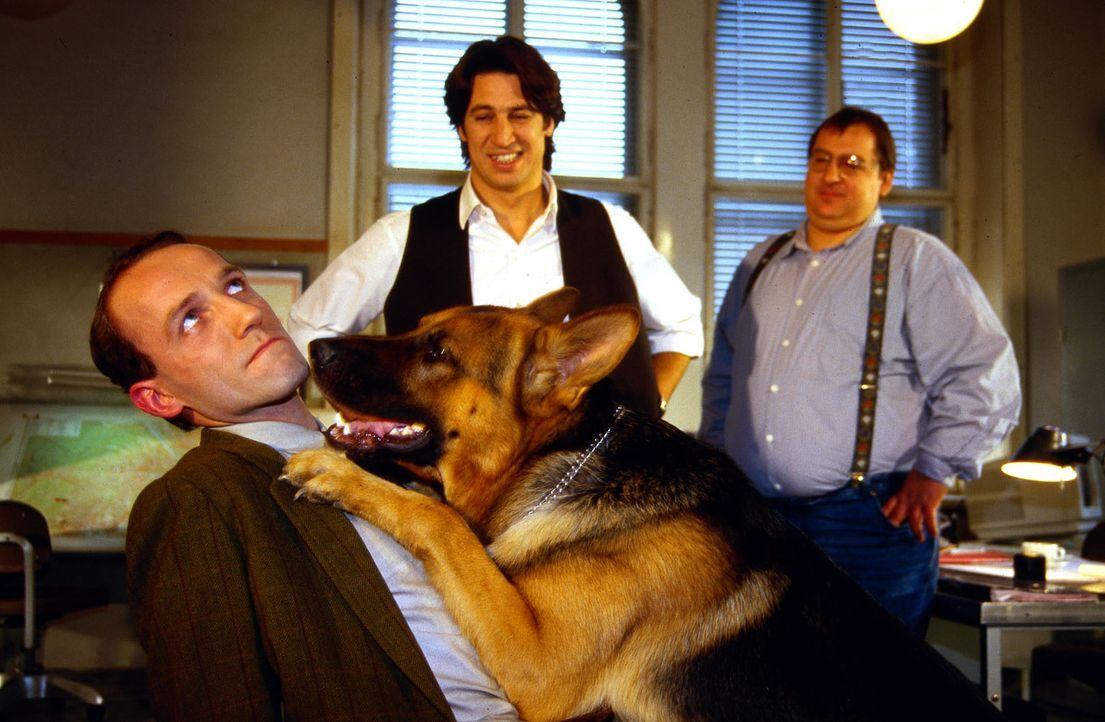 Rex kann es nicht lassen. Er geht auf Tuchfühlung mit Ernst Stockinger (Karl Markovics, l.). Moser (Tobias Moretti, M.) und Höllerer (Wolf Bachofner... - Bildquelle: Ali Schafler Sat.1