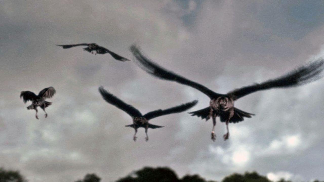 Die Krähen verhalten sich ungewöhnlich aggressiv. - Bildquelle: TVT Sat.1