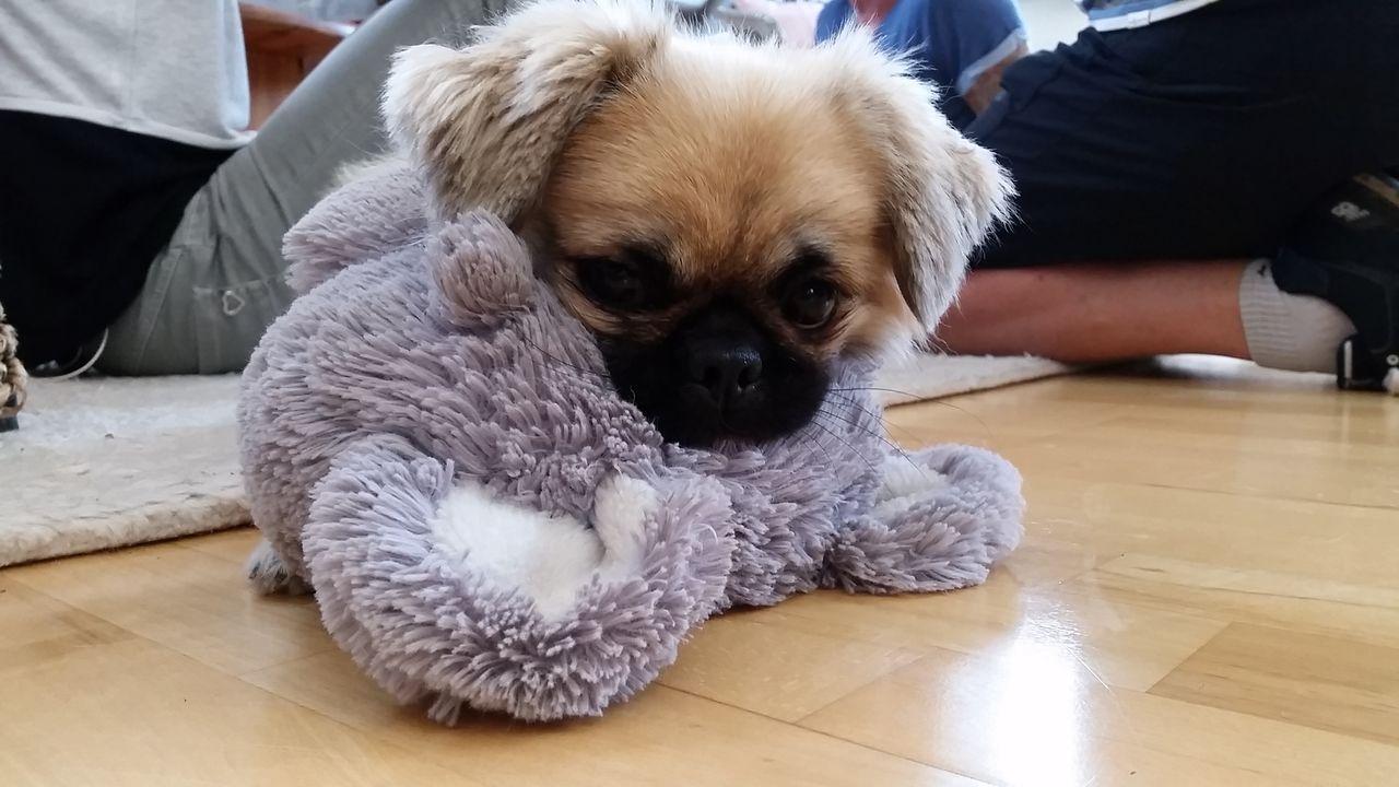 Bogyo und sein Lieblingsspielzeug