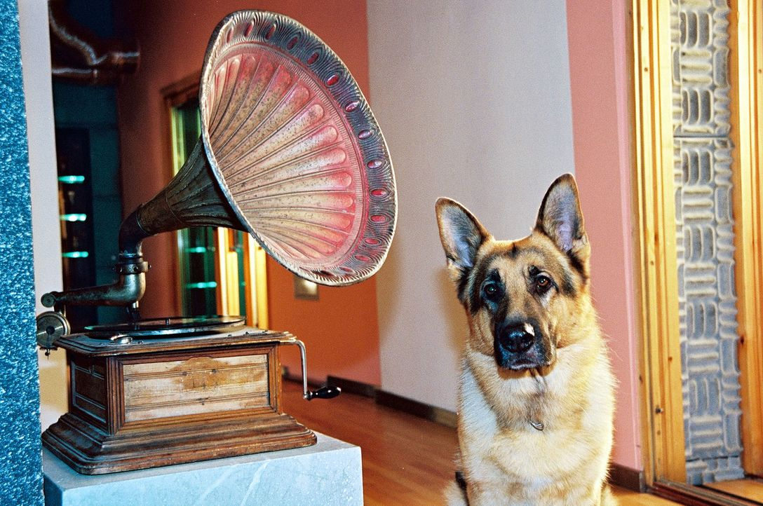 Wer hätte das gedacht? Rex ist ein echter Musik-Liebhaber! - Bildquelle: Ali Schafler Sat.1
