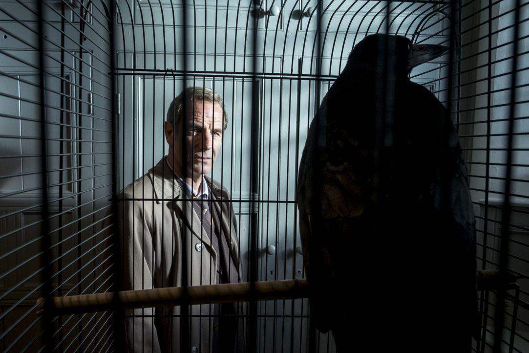Geordie Keating (Robson Green) - Bildquelle: Colin Hutton KUDOS/ITV / Colin Hutton